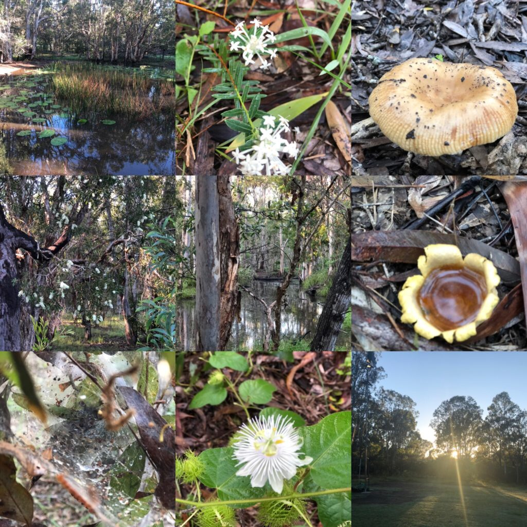 Billabongs, wild flowers, mushrooms, fungi, trap door spiders
